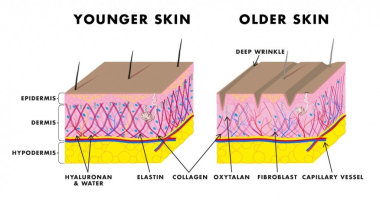 Skin-Care-D_July_diagram-01-1024x539
